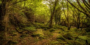 Treescape. A view from a dark forest with trees and mossy rocks Stock Photo