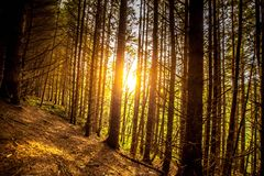 Treescape. A view of a forest with sun shining behind the trees Stock Photography
