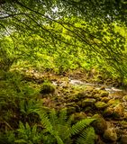 Treescape. A view from a green forest with a stream running through mossy rocks Stock Image