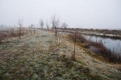 Treesfält och snow Fotografering för Bildbyråer