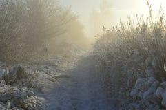 Treesfält och snow Arkivfoton