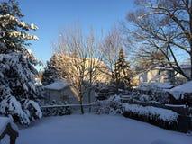 Treesfält och snow Royaltyfri Fotografi