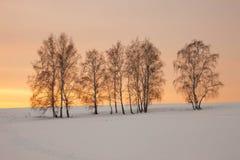 Treesfält och snow Royaltyfria Foton