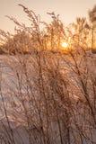 Treesfält och snow Royaltyfri Foto