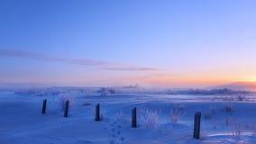 Treesfält och snow Arkivfoto
