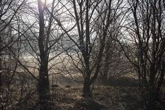 Treesfält och snow Arkivbild