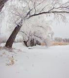 Treesfält och snow Royaltyfria Bilder
