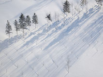 Treeshade over the snowfields Stock Photos