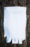 Treesign em um pinho Fotografia de Stock Royalty Free