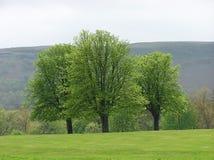 Treesikt Royaltyfria Bilder