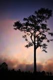 TreeSilhouette Lizenzfreie Stockfotos