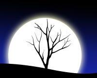 Treesilhouette med moonen Arkivfoto