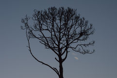 TreeSilhouette på solnedgången Fotografering för Bildbyråer