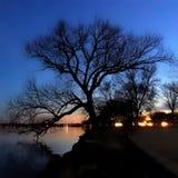 TreeSilhouette på solnedgången Royaltyfri Bild