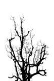 Treesilhouette som isoleras på white Arkivfoto
