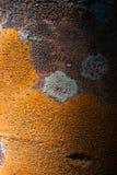 Treeskäll med lavar arkivfoto