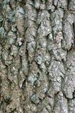 Treeskäll med lavar royaltyfria foton