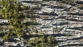 Treeskäll med moss Royaltyfri Bild