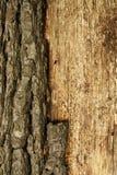 Treeskällbakgrund. Arkivbilder