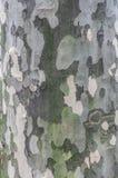 Treeskäll Royaltyfri Foto