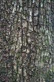 Treeskälltextur Arkivfoto