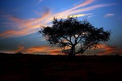 treeskymning Royaltyfri Fotografi