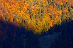 Treess i ljus Arkivfoton