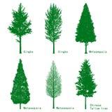 Treessilhouettes Fotografering för Bildbyråer