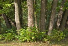 treestammar Arkivbild