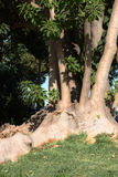 treestammar Royaltyfri Foto