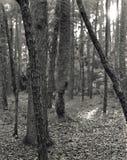 treestammar Arkivbilder