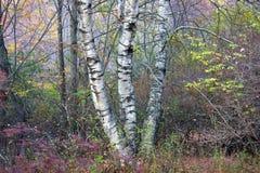 treestammar Royaltyfri Fotografi