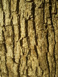 Treestammen texturerar Arkivfoto