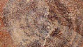 Treestammen texturerar Royaltyfri Foto