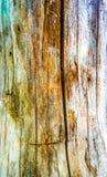 Treestammen texturerar Arkivbilder