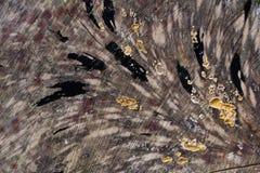 Treestammen texturerar Royaltyfria Bilder