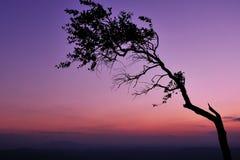 TreeSunset Lizenzfreies Stockbild