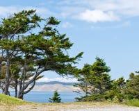 treesvatten Arkivbilder