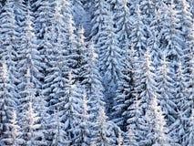 treesvinter Arkivfoto