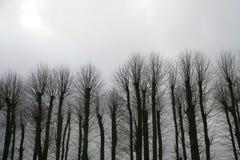 treesvinter royaltyfria foton