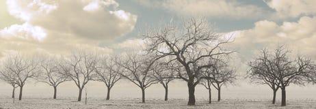 treesvinter Arkivbild