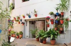 Treet español adornado con las flores en los potes Imagen de archivo libre de regalías