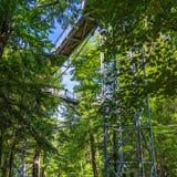 Treetop ścieżka przez mieszanego lasu przy północną krawędzią Harz, widok drewniane deski i poparcia spod spodu zdjęcie royalty free