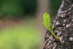 Treetop и лист дерева на черной предпосылке Стоковые Изображения
