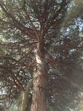 Treetop осмотренный снизу стоковые фотографии rf