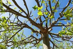 Treetop плоского дерева Стоковое Фото