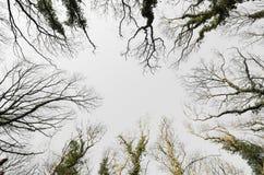 Treetop снизу Стоковая Фотография RF