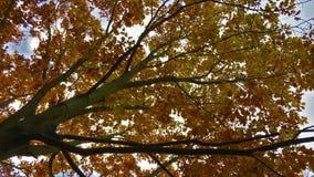 treetop с лучами солнца видеоматериал