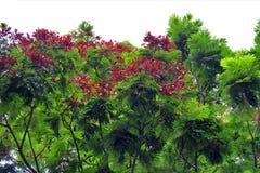 treetop Immagini Stock