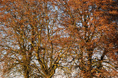 Treetop Royalty Free Stock Images